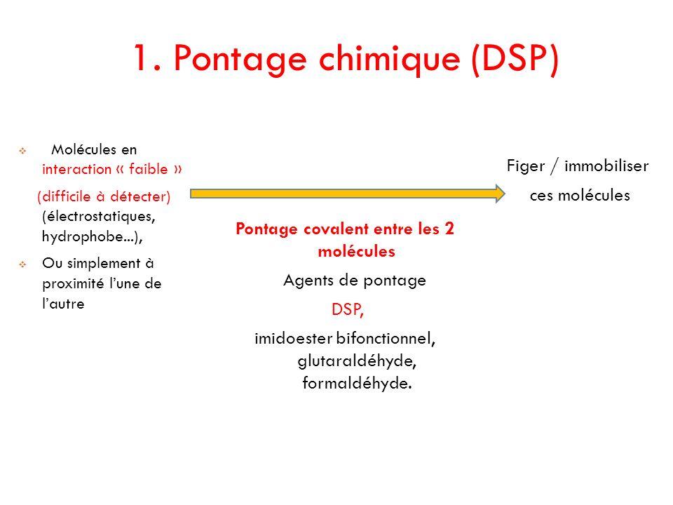 1. Pontage chimique (DSP) Molécules en interaction « faible » (difficile à détecter) (électrostatiques, hydrophobe...), Ou simplement à proximité lune