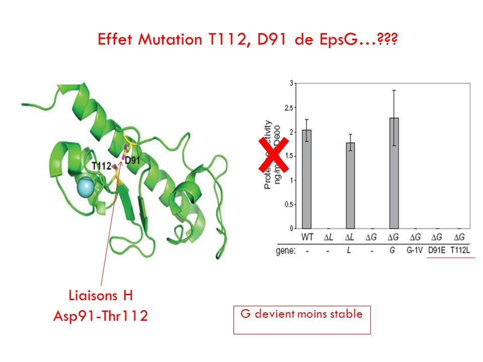 Liaisons H Asp91-Thr112 Effet Mutation T112, D91 de EpsG…??? G devient moins stable