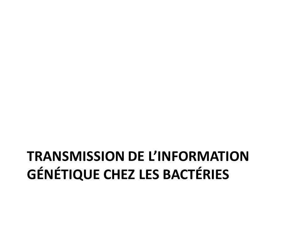 TRANSMISSION DE LINFORMATION GÉNÉTIQUE CHEZ LES BACTÉRIES