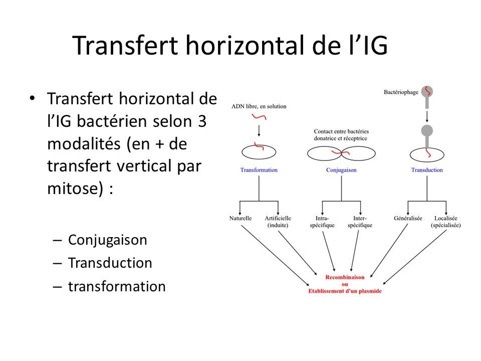 Transfert horizontal de lIG Transfert horizontal de lIG bactérien selon 3 modalités (en + de transfert vertical par mitose) : – Conjugaison – Transduc