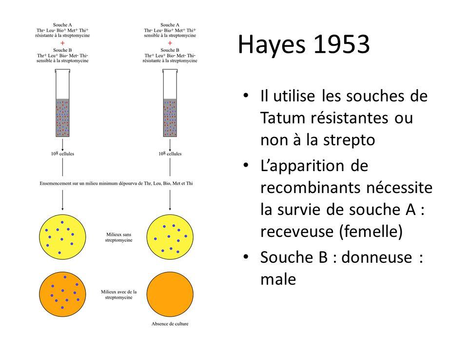Hayes 1953 Il utilise les souches de Tatum résistantes ou non à la strepto Lapparition de recombinants nécessite la survie de souche A : receveuse (fe