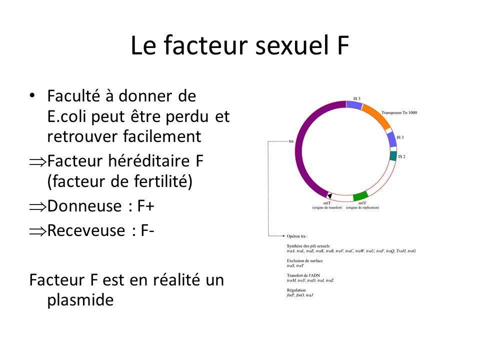 Le facteur sexuel F Faculté à donner de E.coli peut être perdu et retrouver facilement Facteur héréditaire F (facteur de fertilité) Donneuse : F+ Rece