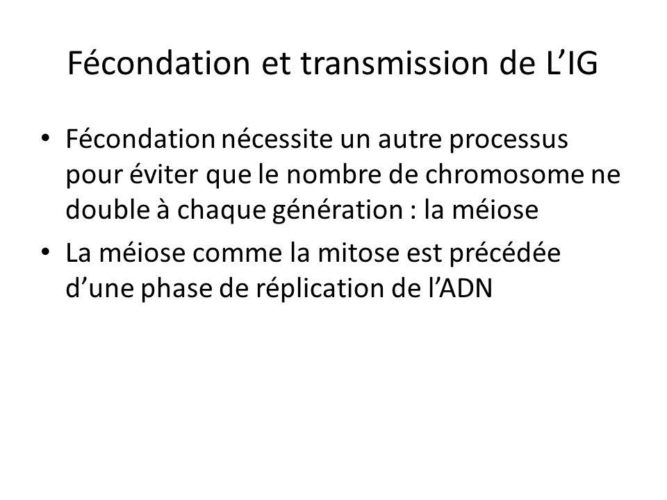 Fécondation et transmission de LIG Fécondation nécessite un autre processus pour éviter que le nombre de chromosome ne double à chaque génération : la