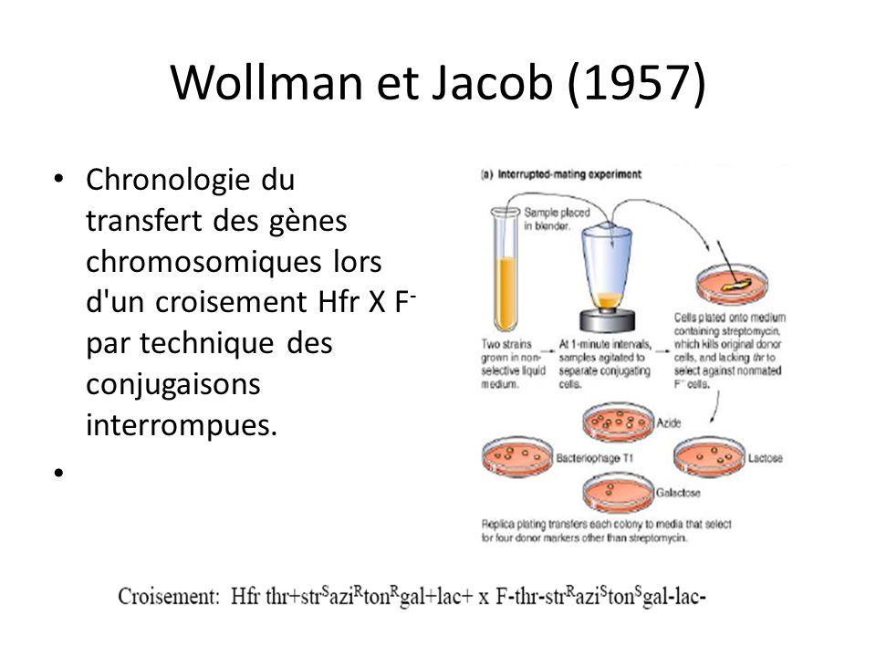 Wollman et Jacob (1957) Chronologie du transfert des gènes chromosomiques lors d'un croisement Hfr X F - par technique des conjugaisons interrompues.