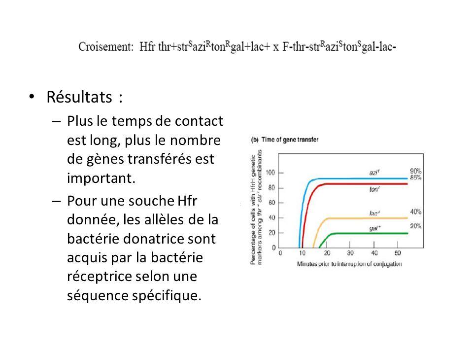Résultats : – Plus le temps de contact est long, plus le nombre de gènes transférés est important. – Pour une souche Hfr donnée, les allèles de la bac