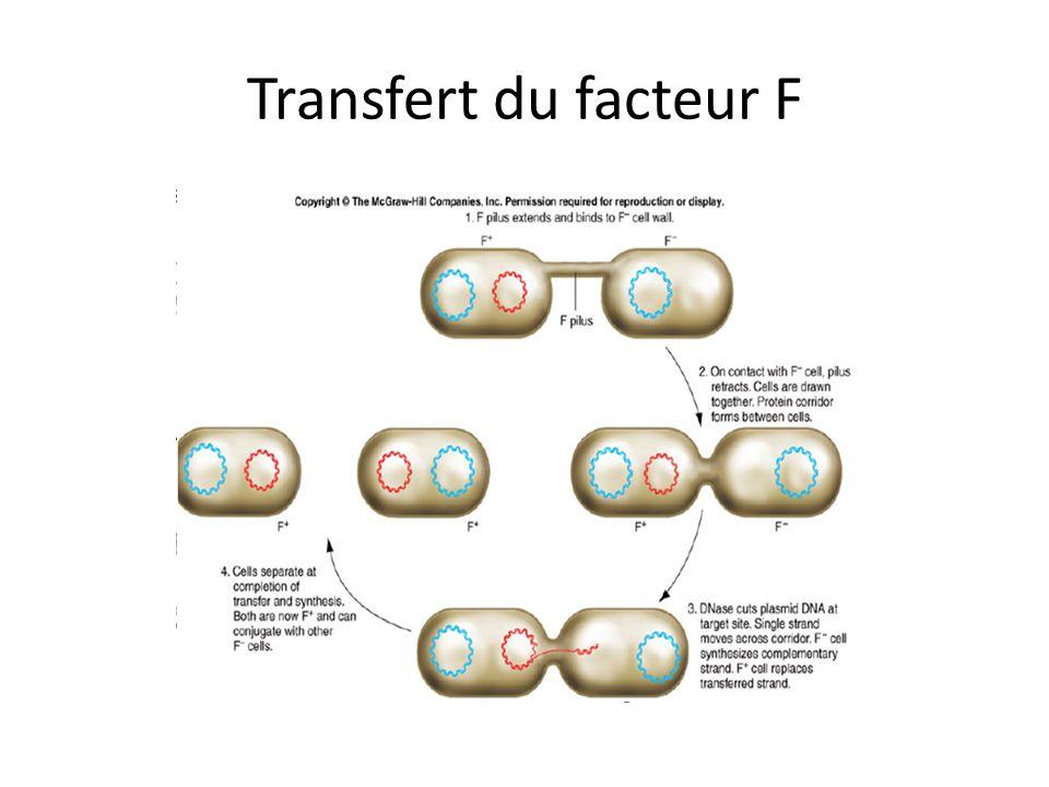 Transfert du facteur F