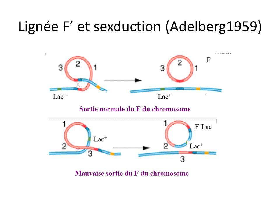 Lignée F et sexduction (Adelberg1959)