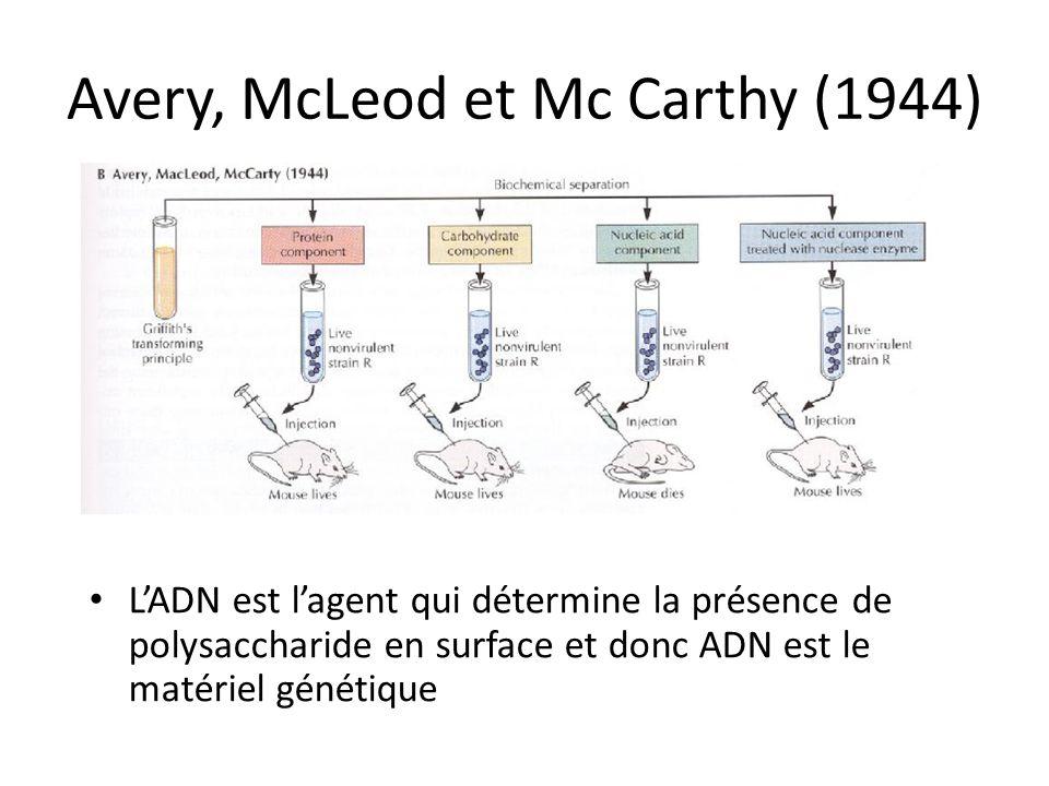 Avery, McLeod et Mc Carthy (1944) LADN est lagent qui détermine la présence de polysaccharide en surface et donc ADN est le matériel génétique