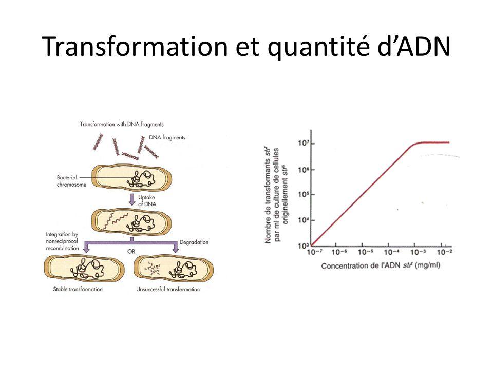 Transformation et quantité dADN