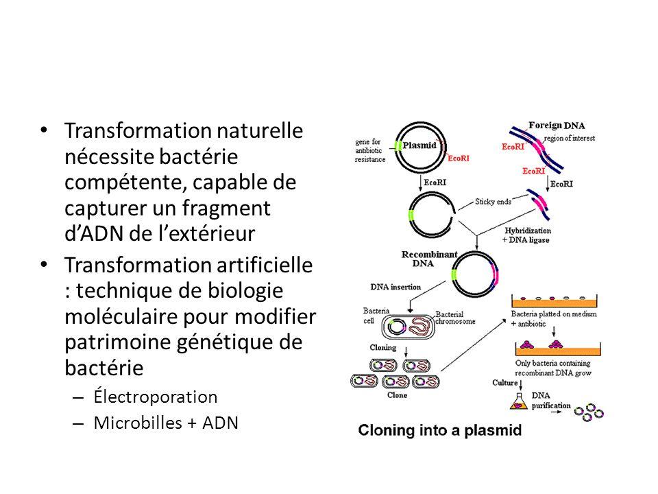 Transformation naturelle nécessite bactérie compétente, capable de capturer un fragment dADN de lextérieur Transformation artificielle : technique de