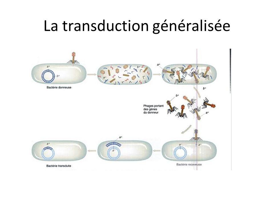 La transduction généralisée