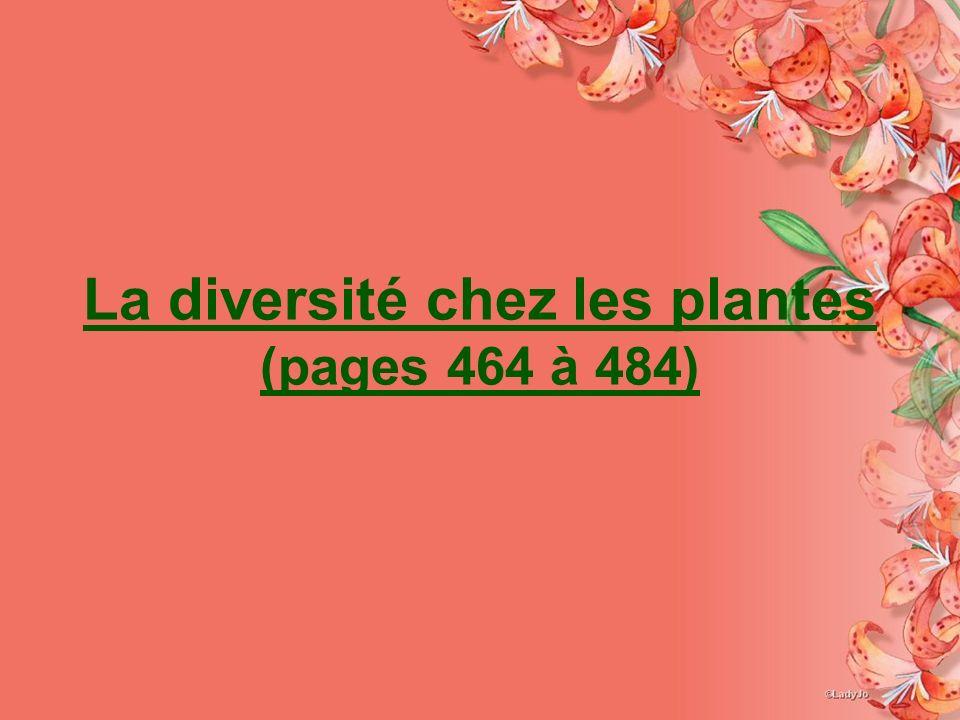 La diversité chez les plantes (pages 464 à 484)