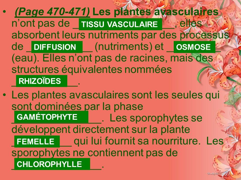 (Page 470-471) Les plantes avasculaires nont pas de _________________, elles absorbent leurs nutriments par des processus de ___________ (nutriments) et _________ (eau).