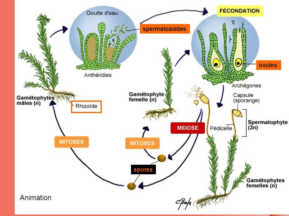ovules spermatozoïdes spores Animation