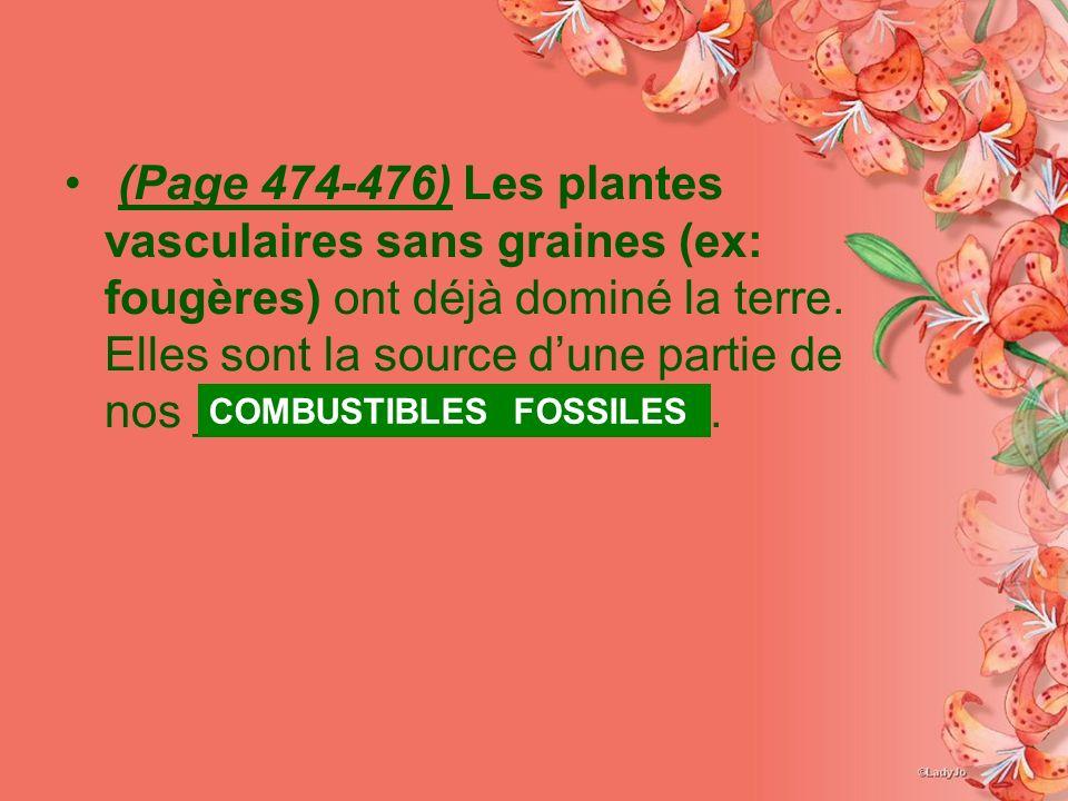(Page 474-476) Les plantes vasculaires sans graines (ex: fougères) ont déjà dominé la terre. Elles sont la source dune partie de nos _____________ ___