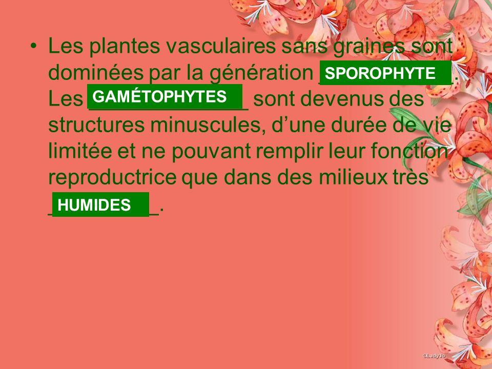 Les plantes vasculaires sans graines sont dominées par la génération ___________.