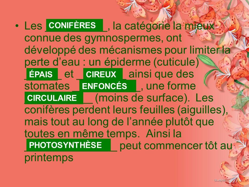 Les __________, la catégorie la mieux connue des gymnospermes, ont développé des mécanismes pour limiter la perte deau : un épiderme (cuticule) ______ et ________ ainsi que des stomates ___________, une forme ___________ (moins de surface).