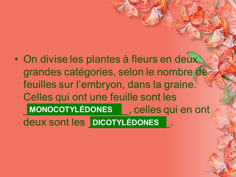 On divise les plantes à fleurs en deux grandes catégories, selon le nombre de feuilles sur lembryon, dans la graine. Celles qui ont une feuille sont l