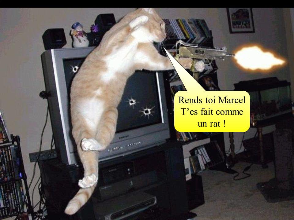 Rends toi Marcel Tes fait comme un rat !