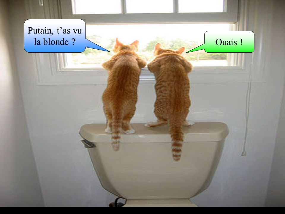Putain, tas vu la blonde ? Ouais !