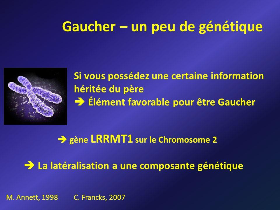 Gaucher – un peu de génétique Si vous possédez une certaine information héritée du père Élément favorable pour être Gaucher C. Francks, 2007 gène LRRM