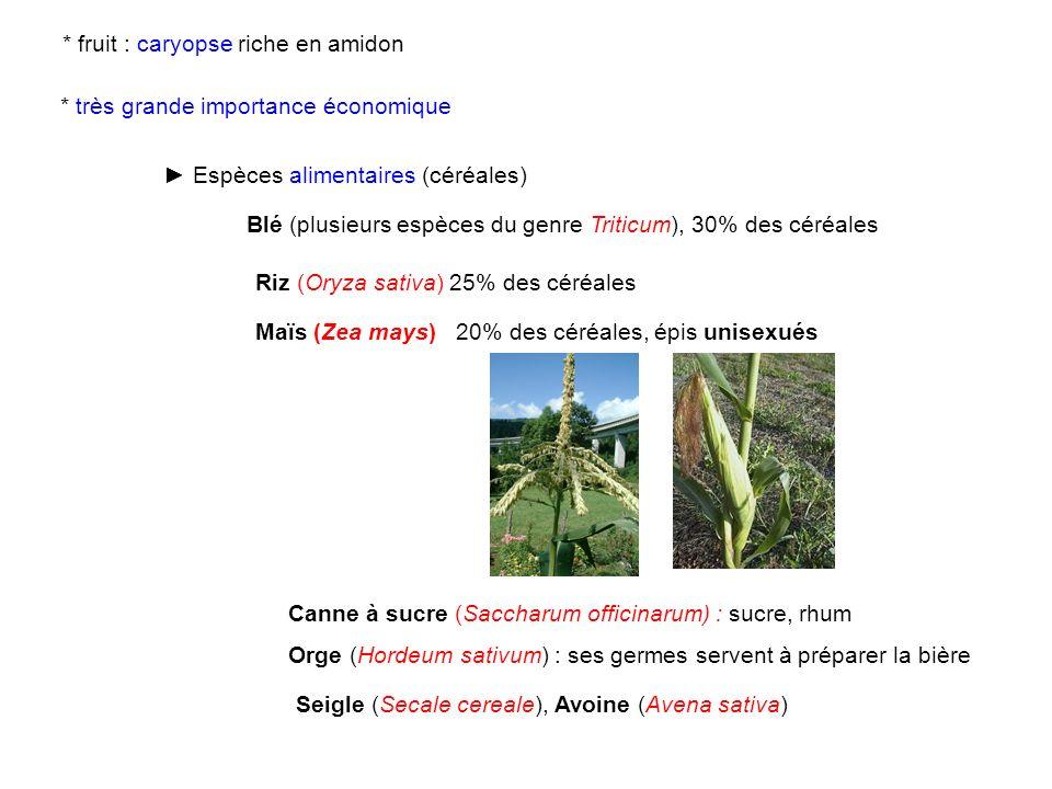 Espèces alimentaires (céréales) Blé (plusieurs espèces du genre Triticum), 30% des céréales Riz (Oryza sativa) 25% des céréales * fruit : caryopse ric