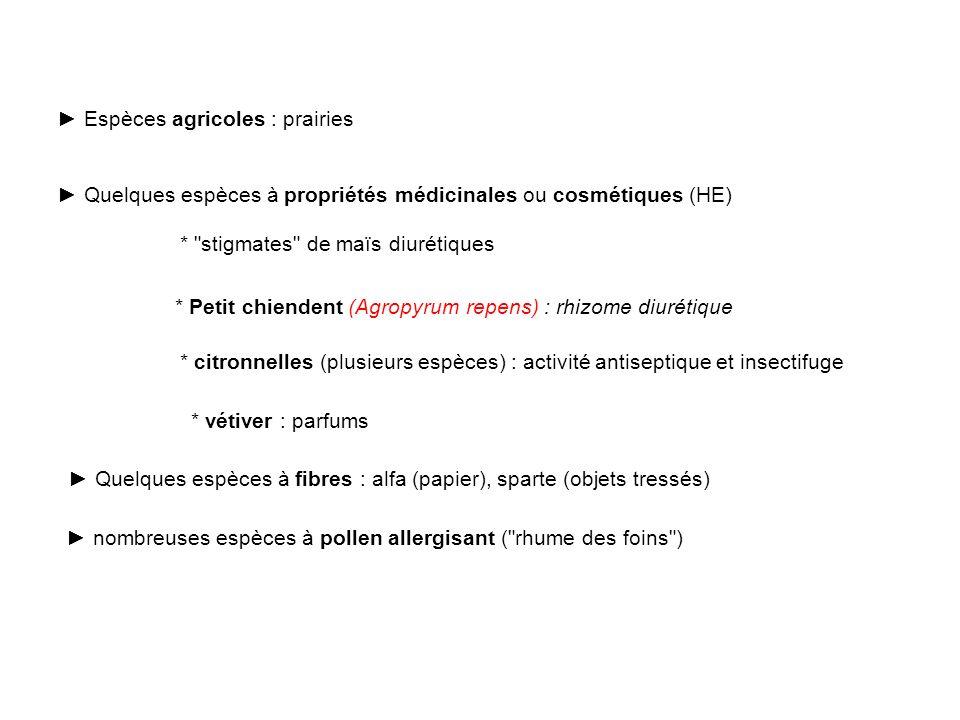 Espèces agricoles : prairies Quelques espèces à propriétés médicinales ou cosmétiques (HE) * Petit chiendent (Agropyrum repens) : rhizome diurétique *