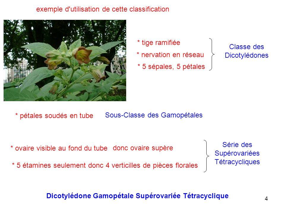 4 exemple d'utilisation de cette classification * tige ramifiée * nervation en réseau * 5 sépales, 5 pétales Classe des Dicotylédones * pétales soudés
