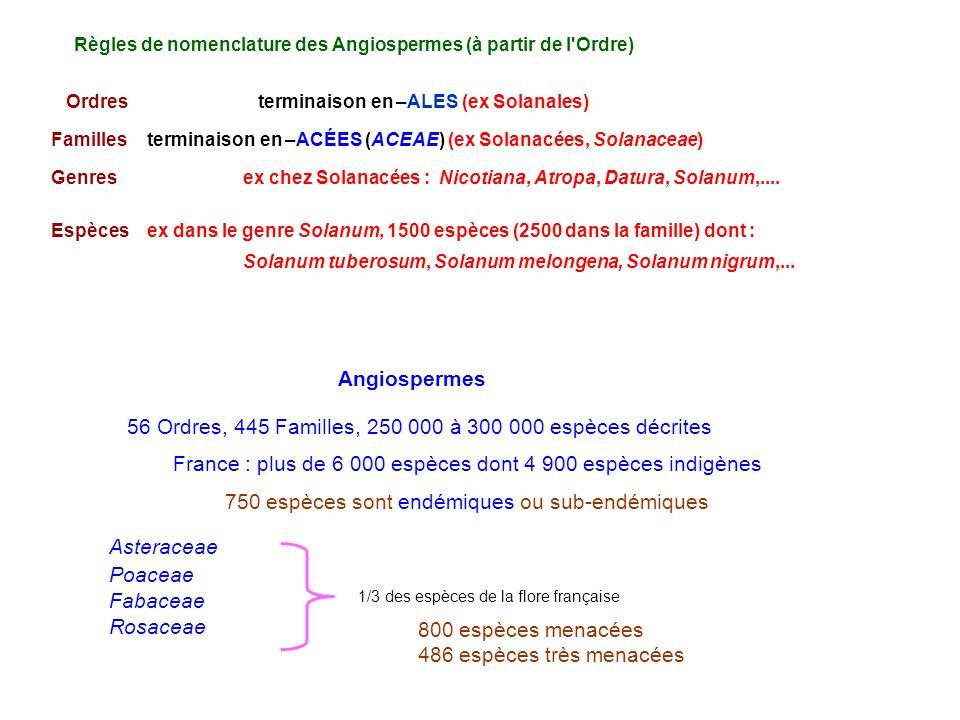 Espècesex dans le genre Solanum, 1500 espèces (2500 dans la famille) dont : Solanum tuberosum, Solanum melongena, Solanum nigrum,... Ordresterminaison