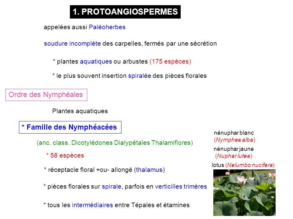 1. PROTOANGIOSPERMES Ordre des Nymphéales * Famille des Nymphéacées * 58 espèces * pièces florales sur spirale, parfois en verticilles trimères Plante