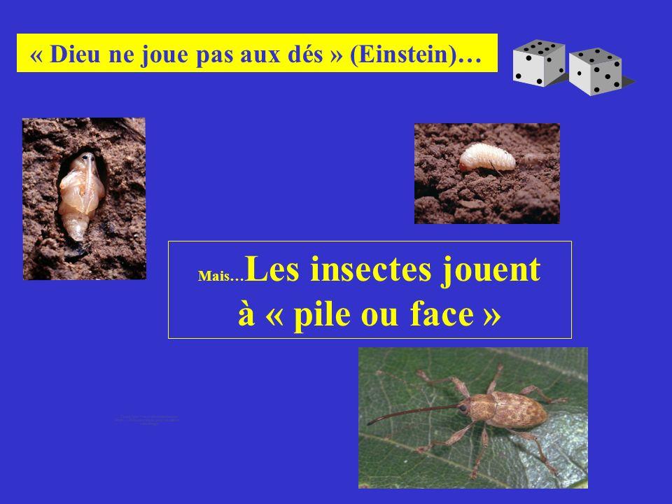 Mais… Les insectes jouent à « pile ou face » « Dieu ne joue pas aux dés » (Einstein)…