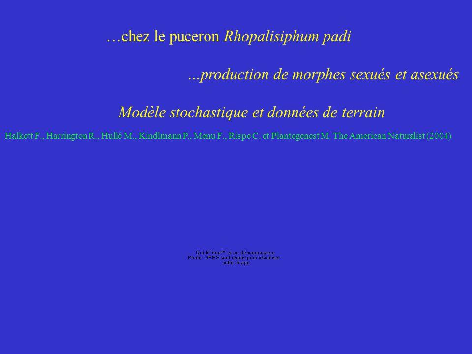 …chez le puceron Rhopalisiphum padi …production de morphes sexués et asexués Modèle stochastique et données de terrain Halkett F., Harrington R., Hullé M., Kindlmann P., Menu F., Rispe C.