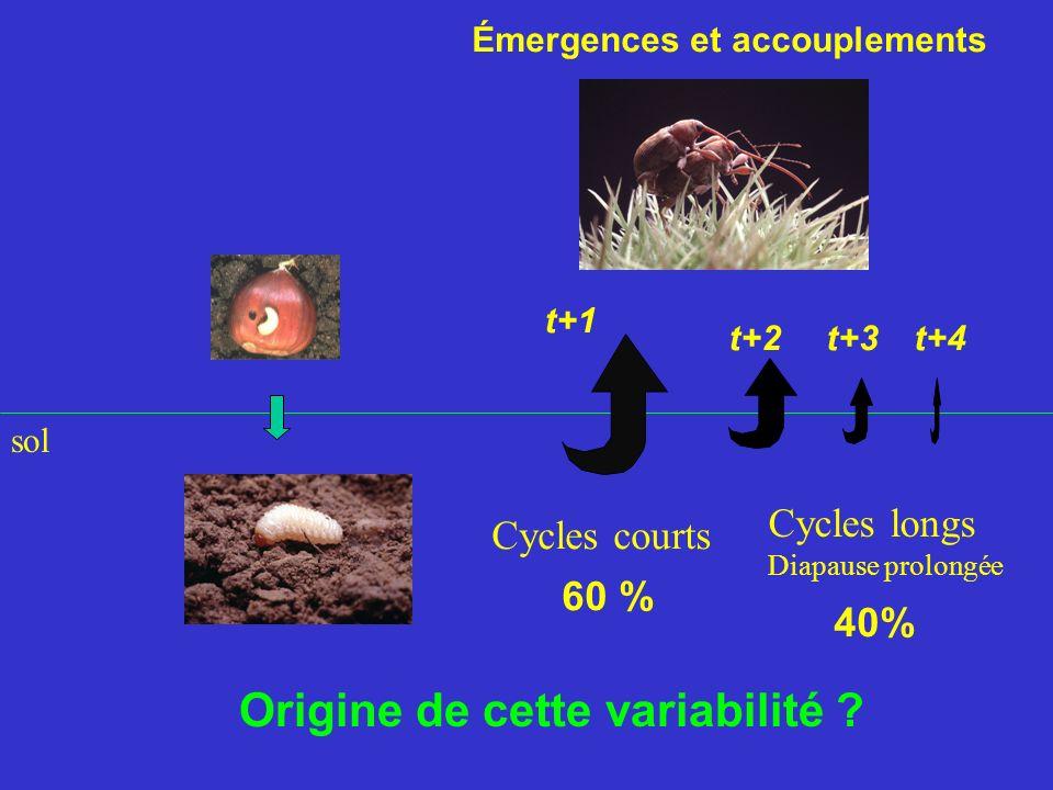 40% 60 % t+2t+3t+4 Cycles longs Diapause prolongée sol Émergences et accouplements t+1 Cycles courts Origine de cette variabilité ?
