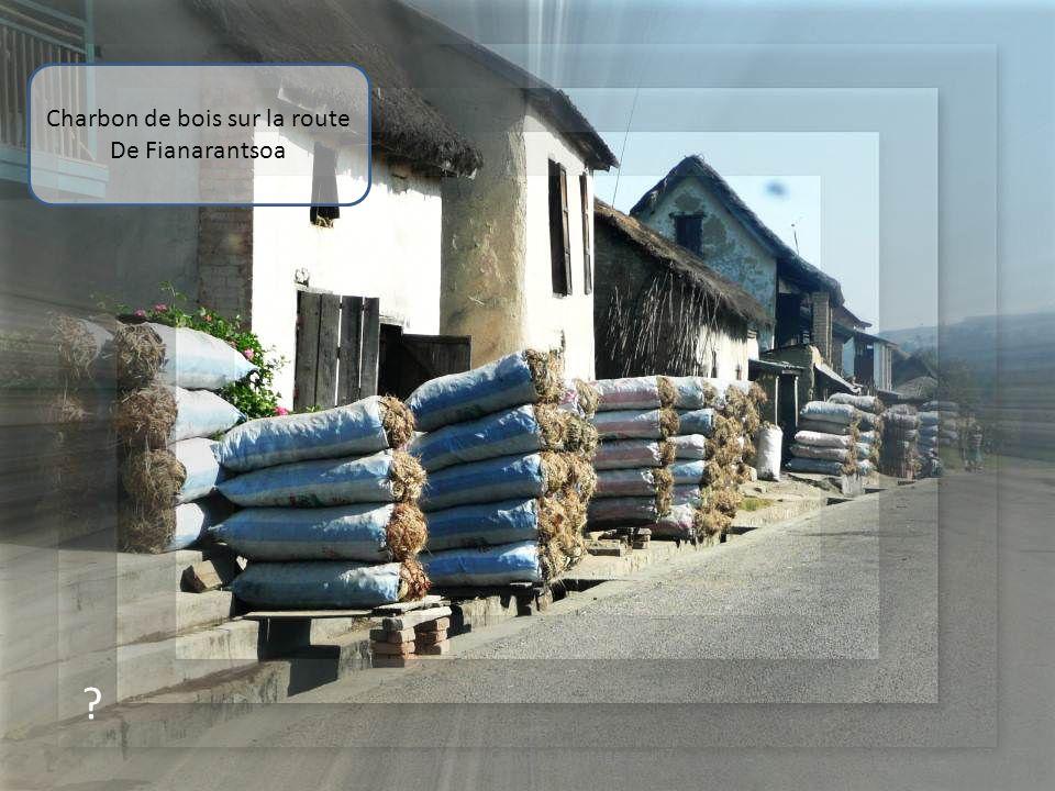 ? Zébus sur la route De Fianarantsoa 26photos Marcel Camoin - Montage: souri7
