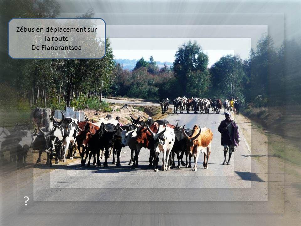 ? Charbon de bois sur la route De Fianarantsoa 27photos Marcel Camoin - Montage: souri7