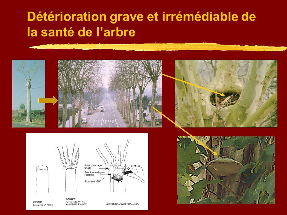 Assurer la résistance mécanique future des arbres Eliminer : les branches à écorce incluse les branches qui se frottent le bois mort, les chicots et branches cassées les rameaux parasités