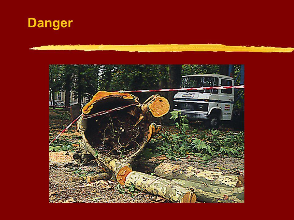 Un arbre mal venant peut être recépé
