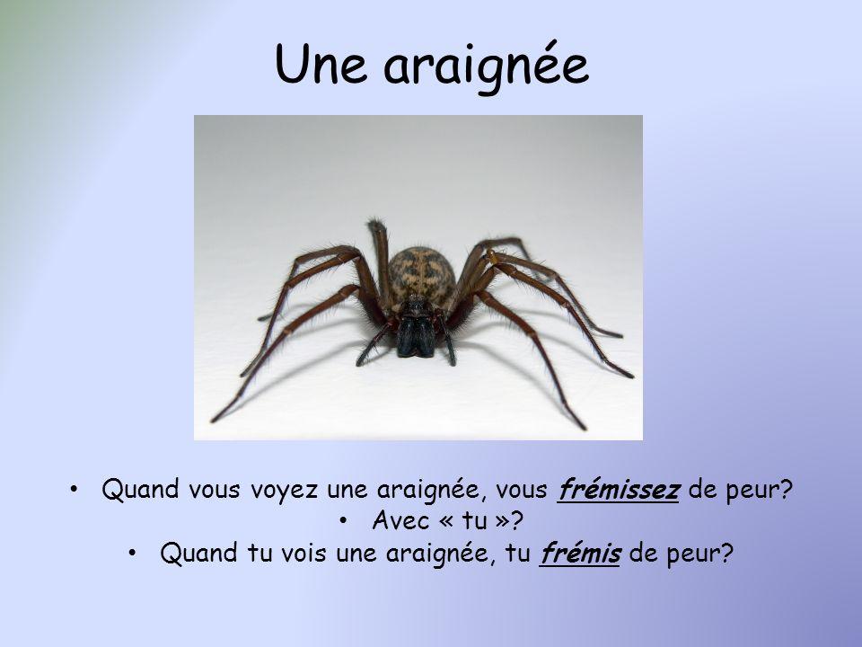 Une araignée Quand vous voyez une araignée, vous frémissez de peur? Avec « tu »? Quand tu vois une araignée, tu frémis de peur?