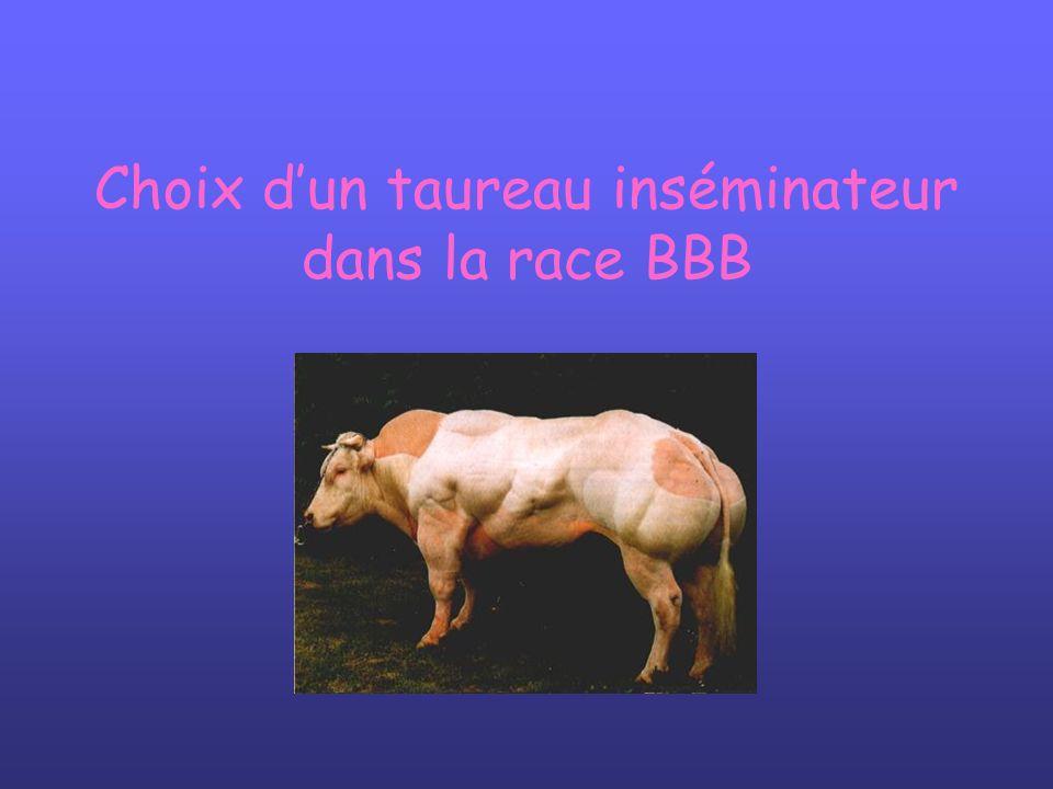 Choix dun taureau inséminateur dans la race BBB