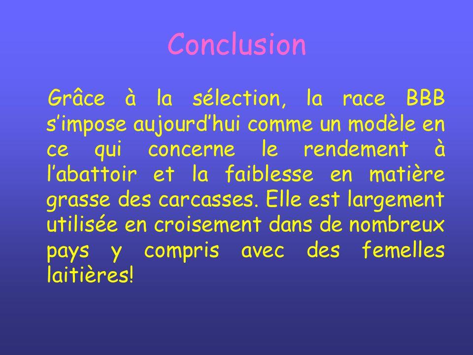 Conclusion Grâce à la sélection, la race BBB simpose aujourdhui comme un modèle en ce qui concerne le rendement à labattoir et la faiblesse en matière