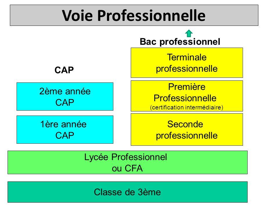 Classe de 3ème Lycée Professionnel ou CFA Seconde professionnelle 1ère année CAP Première Professionnelle (certification intermédiaire) 2ème année CAP Bac professionnel CAP Terminale professionnelle Voie Professionnelle