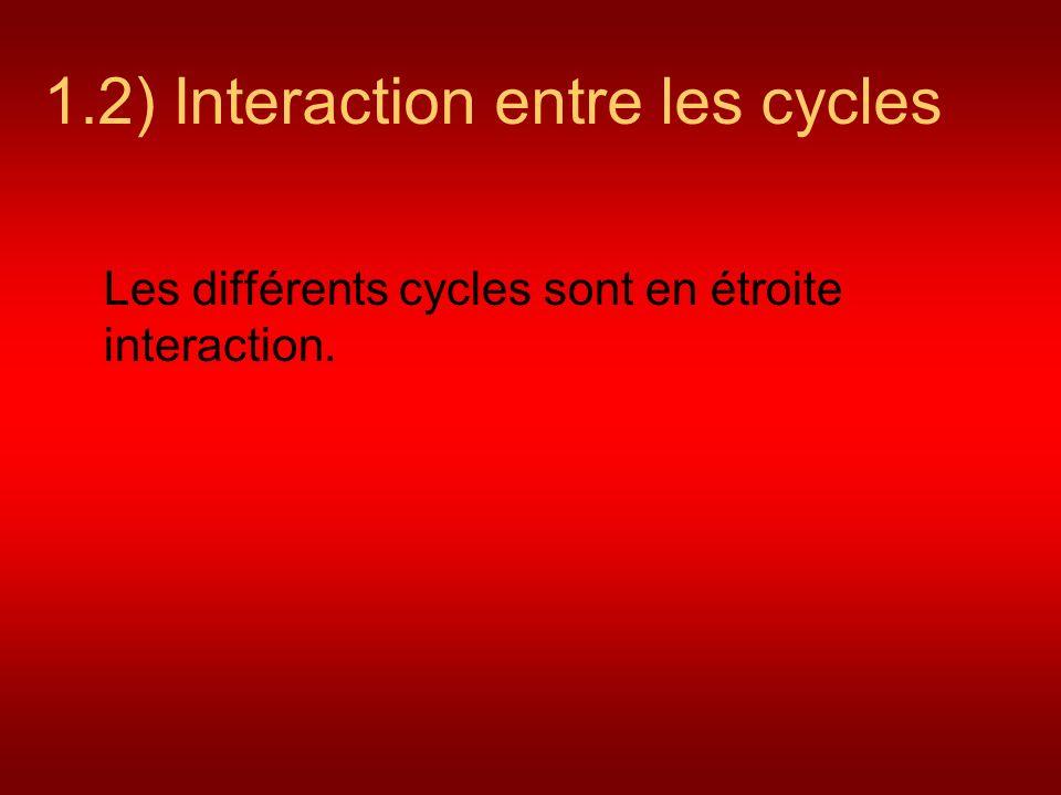 1.2) Interaction entre les cycles Les différents cycles sont en étroite interaction.