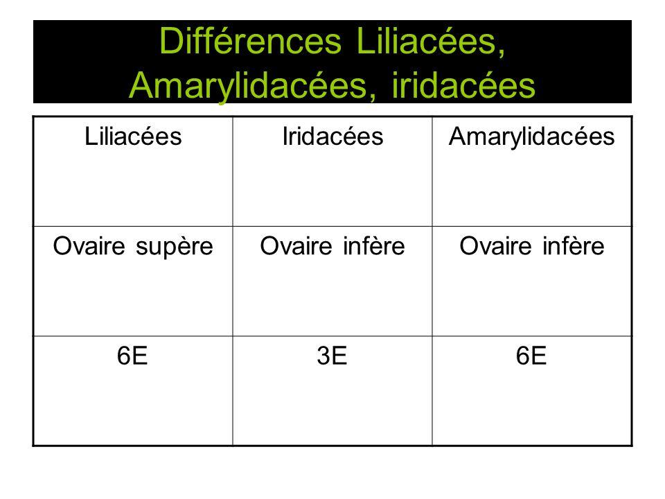 Différences Liliacées, Amarylidacées, iridacées LiliacéesIridacéesAmarylidacées Ovaire supèreOvaire infère 6E3E6E