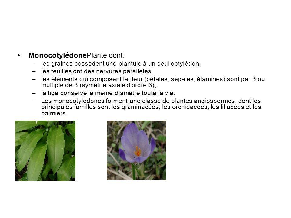 MonocotylédonePlante dont: –les graines possèdent une plantule à un seul cotylédon, –les feuilles ont des nervures parallèles, –les éléments qui compo