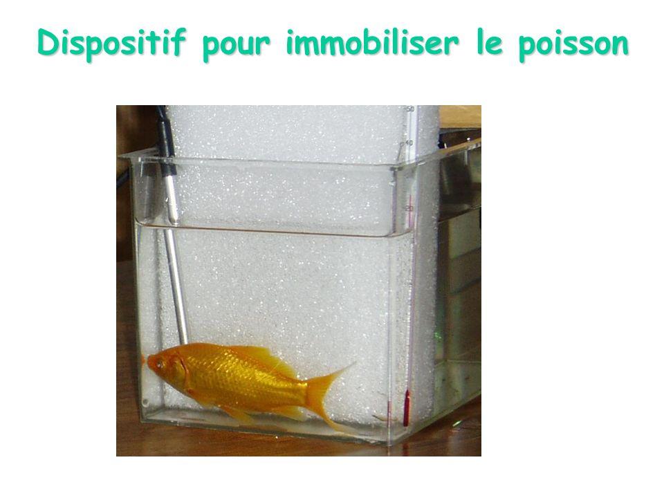 Dispositif pour immobiliser le poisson