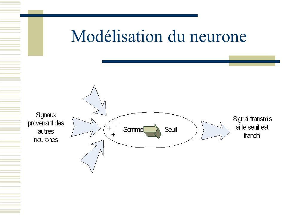 Modélisation du neurone