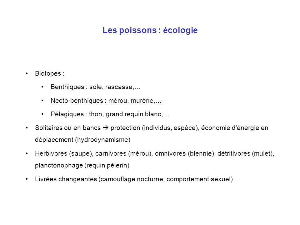 Les poissons : écologie Biotopes : Benthiques : sole, rascasse,… Necto-benthiques : mérou, murène,… Pélagiques : thon, grand requin blanc,… Solitaires