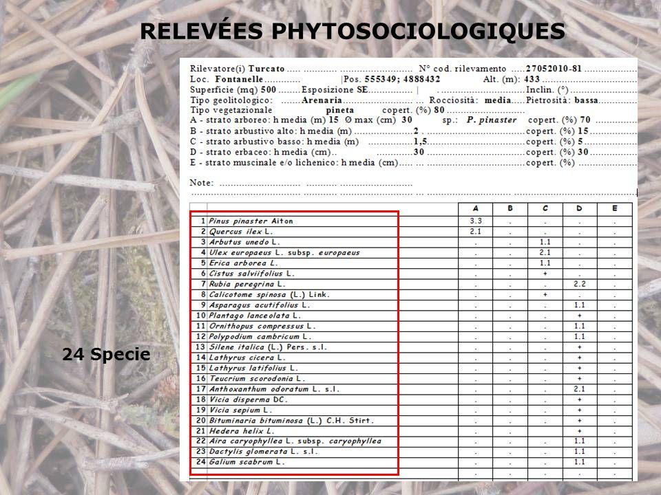 RELEVÉES PHYTOSOCIOLOGIQUES 24 Specie