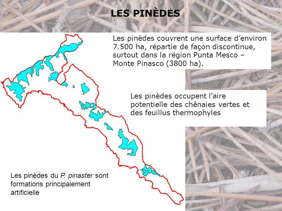 LES PINÈDES Les pinèdes du P.