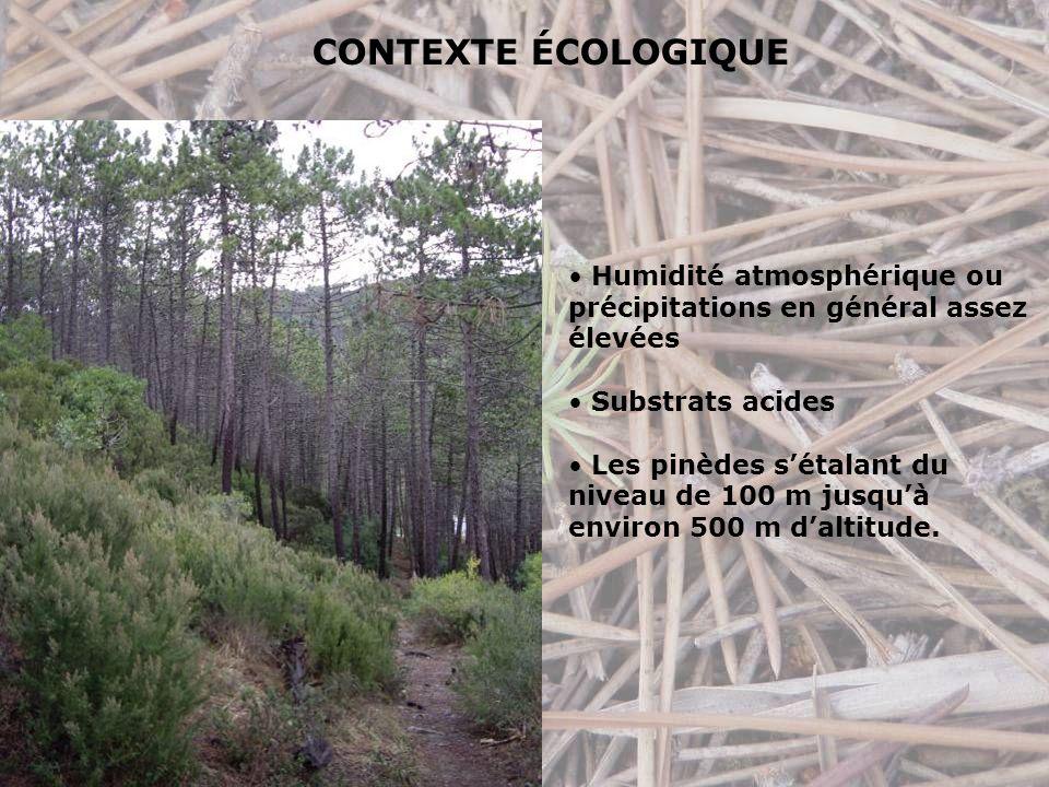 Humidité atmosphérique ou précipitations en général assez élevées Substrats acides Les pinèdes sétalant du niveau de 100 m jusquà environ 500 m daltitude.